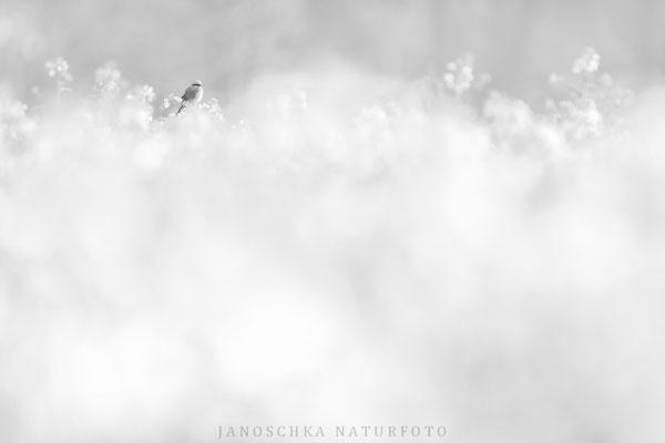 Vögel-12