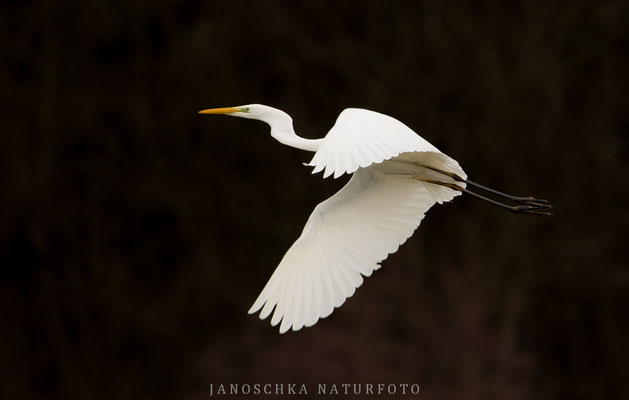 Vögel-6