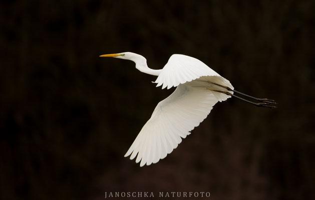Vögel-8