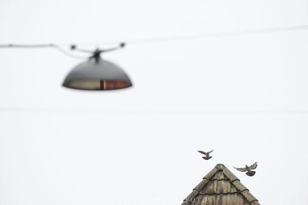 Vögel-4
