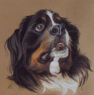 Hondenportret-Pasteltekening-door-Wil-van-der-Plas-Beeldend-Kunstenaar-Portrettekenaar-dier