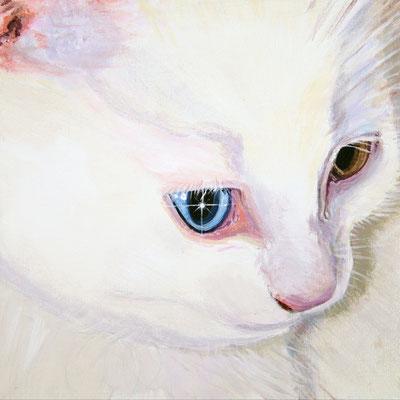 Portret-kat-acrylverf-door-Wil-van-der-Plas-Beeldend-Kunstenaar-Portretschilder-dier