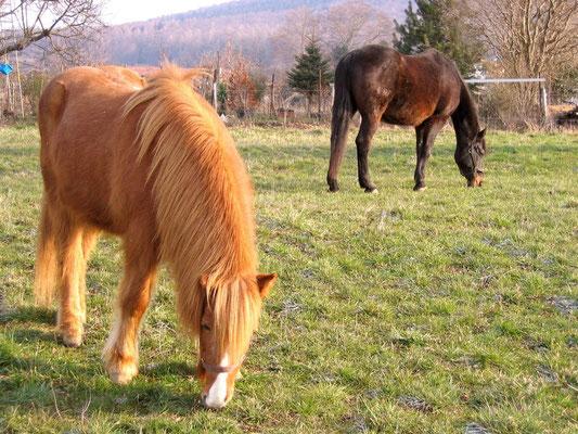 Winkel, auch für Pferde ein kleines Paradies