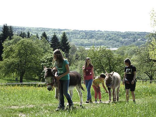 Mit den Eseln unterwegs, ein Spass für groß und klein