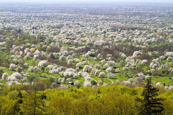 Erleben Sie im Frühjahr die Obstrbaumblüte vor der Haustüre