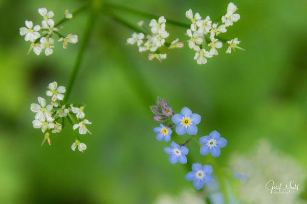 Blüten in Slowenien