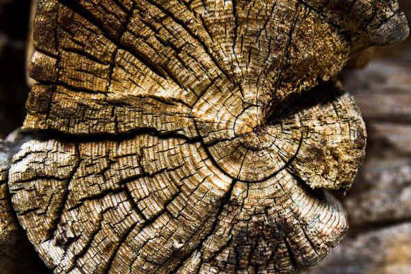 Holz- ein Werkstoff mit Charakter