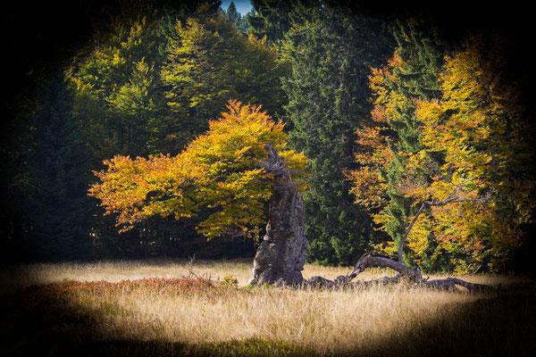 Hochschachten, Bayerischer Wald