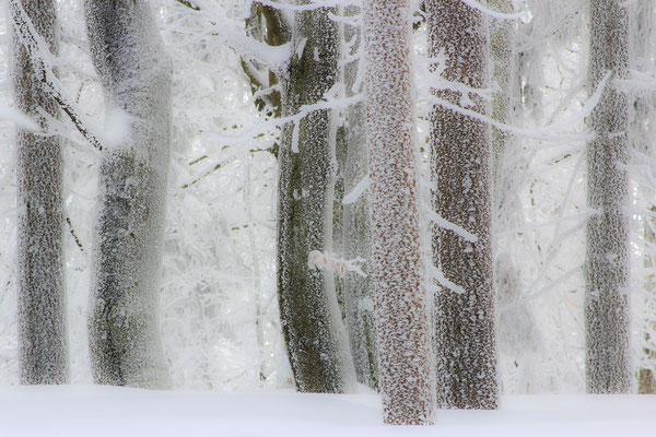 am Kaitersberg, Bayerischer Wald