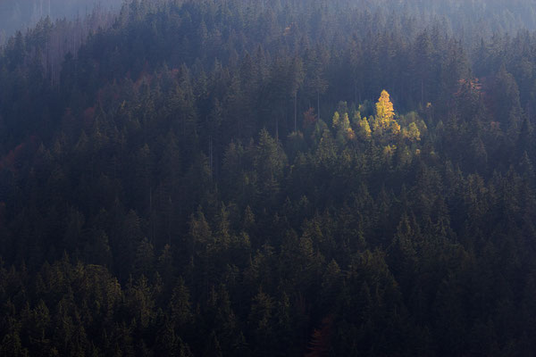 am Kleinen Arbersee, Bayerischer Wald
