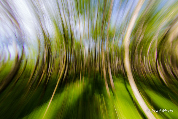 Wald-Experimente