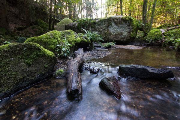 """Naturschutzgebiet """"Doost"""" bei Floß"""