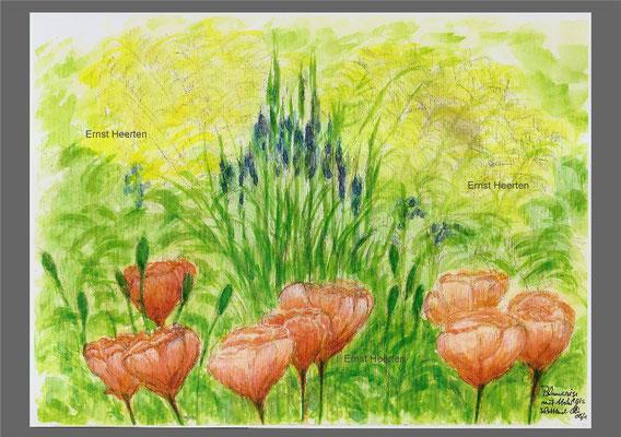 Blumenwiese mit Mohn (Schottland)    /  100,- €