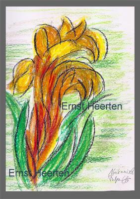 afrikanische Tulpe (Madeira)         /   85.-€