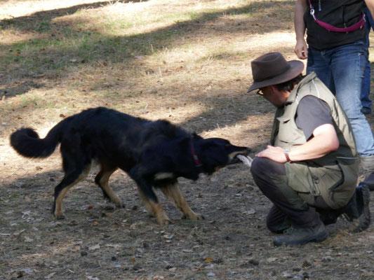 Bonita von den Beetzsee-Wiesen beim Spiel mit Fremdperson