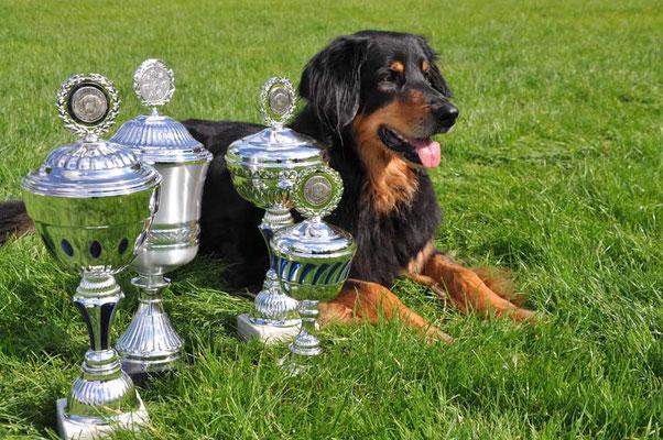 Würfel zur Bärenschlucht (12 Jahre) mit ihren Pokalen