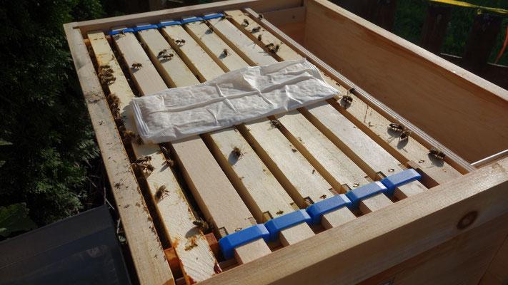 Die MAQS Ameisensäure Gel Strips liegen direkt auf den Waben.
