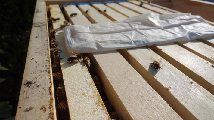 Die Ameisensäure wirkt sogar bis in die verdeckelte Brut und tötet auch da die Varroa Milben.
