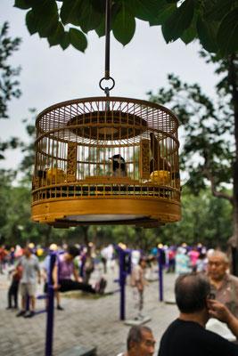 Men neemt zijn vogeltje mee wanneer je gaat sporten in een park in Beijing