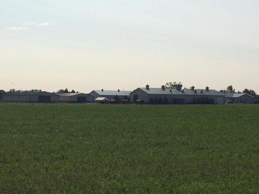 Fields of organic plants