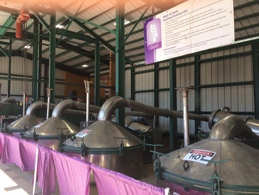 Young Living's distillery