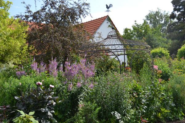Gartenreise Klever Land 12 Juli 2019 Cimiotti S Garten