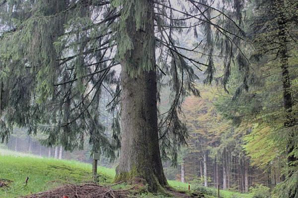 Kuhhimmel, Allgäu, Niederbayern
