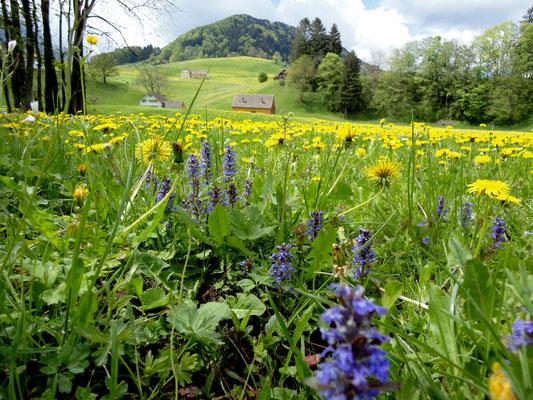 Appenzell, Kanton Appenzell