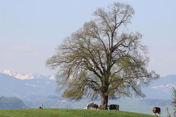 Vechigen, Kanton Bern