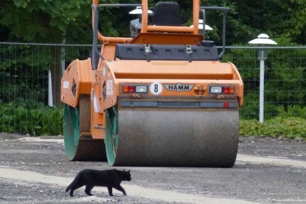 03.08.2012: Schwarze Katze mit Walze Nummer 8, stehend