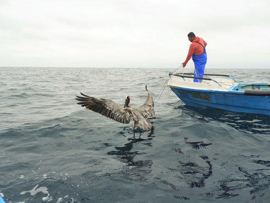 Es geht hinaus aufs Meer - vorbei an den Fischern