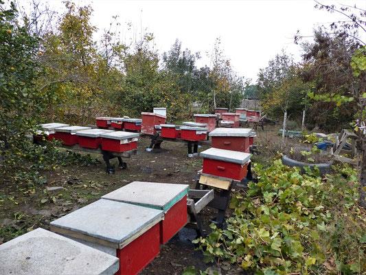 ....und ihre Bienen
