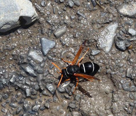 Das einzige Insekt, dass sich nach draussen gewagt hat ;o)