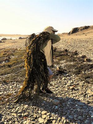 Luis fischt die Cochayuyo aus dem kalten Pazifik und schleppt sie an den Strand zum Trocknen....