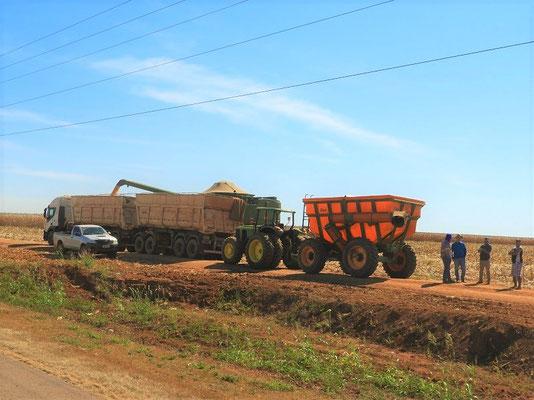 Ernte der riesigen Maisfelder