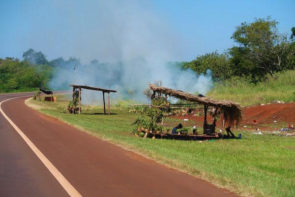 Guarani-Ureinwohner verkaufen Bromelien und fackeln den Abfall ab