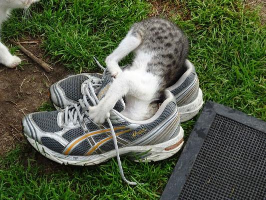 ...und die kleine Katze Robys Schuhen knabbert ;o))