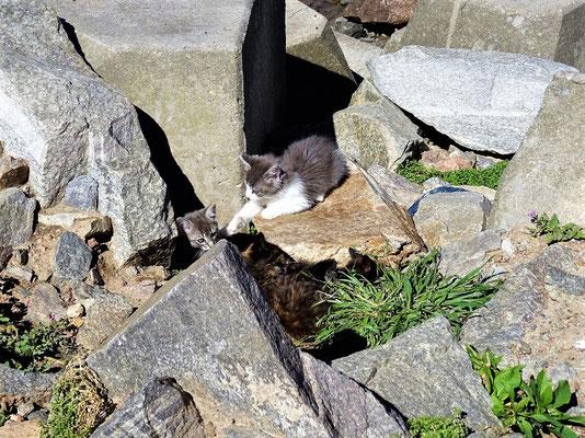 Nicht nur wir wohnen da, es gibt zahlreiche Katzen