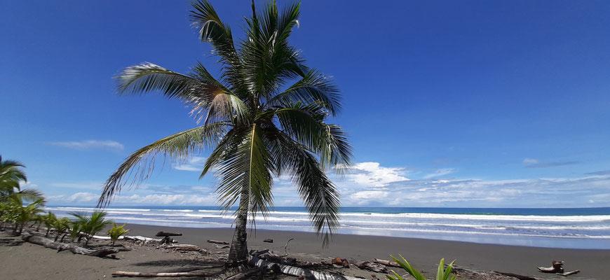 Pazifikstrand in Matapalo....