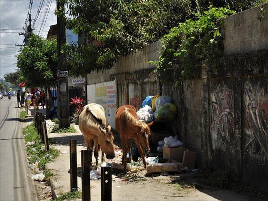Der Norden Brasiliens - oft vermüllt :o(