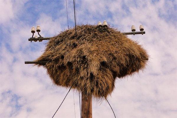 Die Webervögel mit ihren kunstvollen Hänge-Nestern