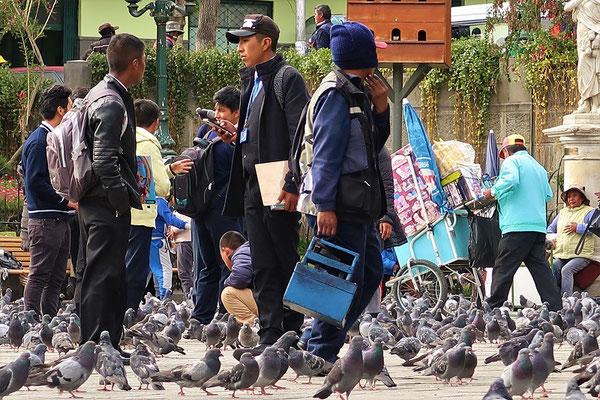 ....mit vielen Tauben