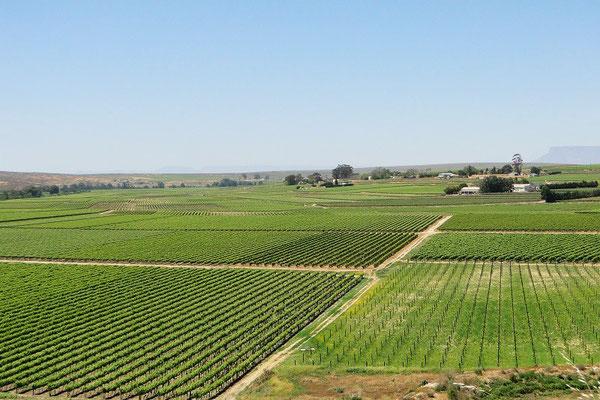 Langsam kommen wir in die Weinanbau-Gegend