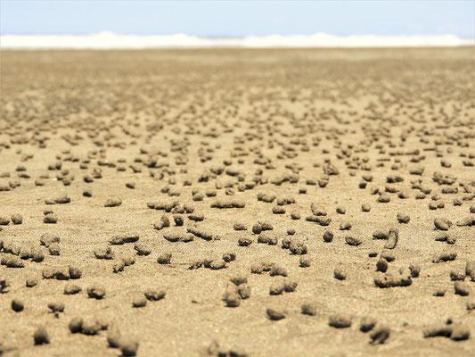 ....und hinterlassen ca. alle 2 Sekunden einen 7-8mm grossen Sandkegel....
