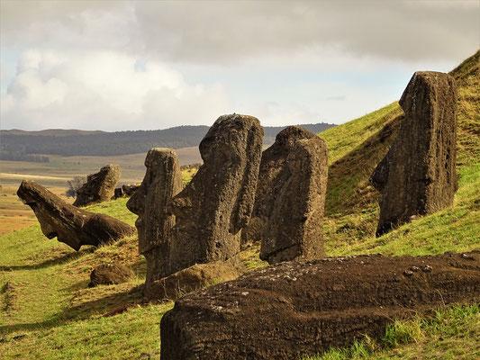 Diese Moai warten immer noch auf den Abtransport....