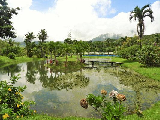....der Garten mit dem natürlichen Teich....