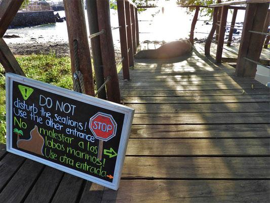 Stopp-Schild für Fussgänger - Seelöwe hält Mittagsschläfchen