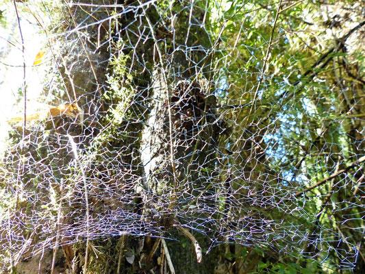 Netz einer 2 mm kleinen Spinne
