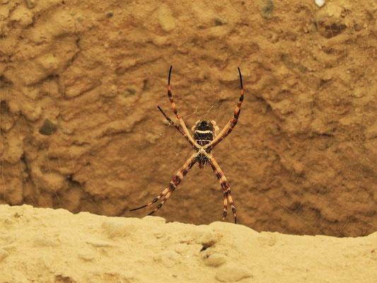 Spinnen und Hunde sind heute die einzigen Bewohner der antiken Stadt-Ruine