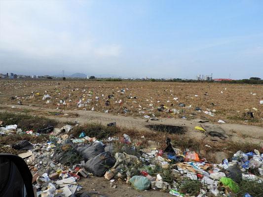 ....und der Wind verteilt die Plastiktüten über das ganze Feld